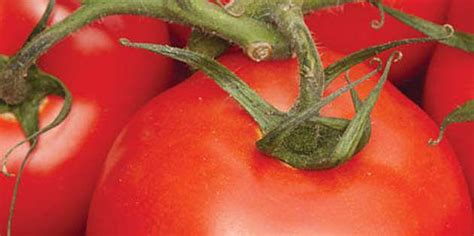 Dupont Lannate 25 Wp Insektisida insecticida carbamato dupont lannate 174 25wp portugal dupont portugal