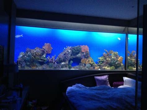 aquarium hotel room aquarium room picture of hotel h2o manila tripadvisor