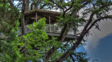 treehouse house 12 tempting tree house cabins in texas flavorverse