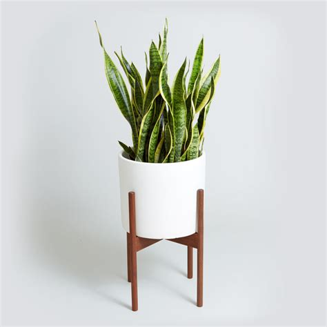 plant for bedroom bedroom plants lou s crazy world