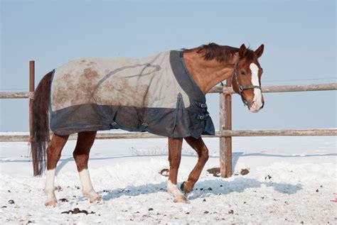 decke pferd thermoregulation beim pferd decke rauf ja oder nein