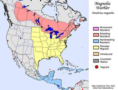 magnolia warbler south dakota birds and birding