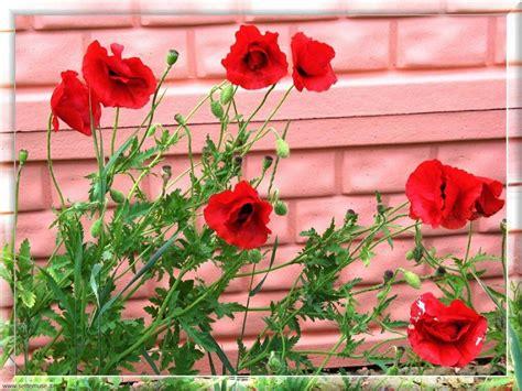 cerco immagini di fiori foto fiori di prato per sfondi settemuse it