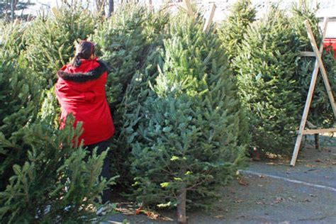 shrewsbury christmas tree sale this weekend shrewsbury
