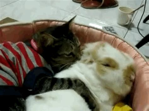 cat hugging how to hug a cat perfectly every time huffpost
