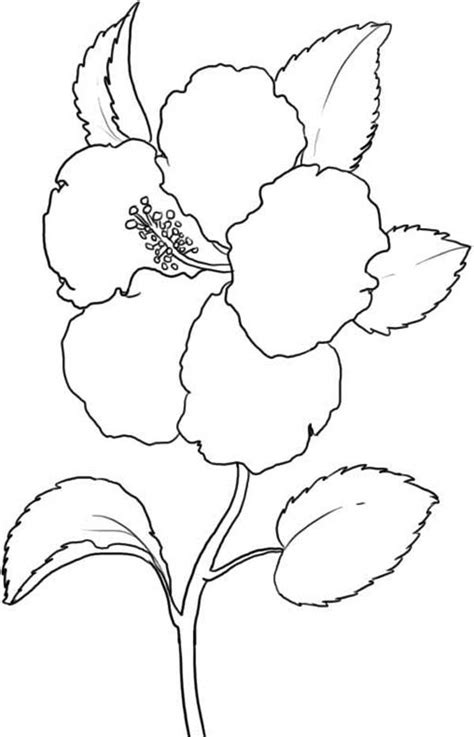 coloring page of hawaii s state flower free coloring pages of hibiscus flower