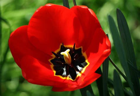 fiore tulipano hotel r best hotel deal site