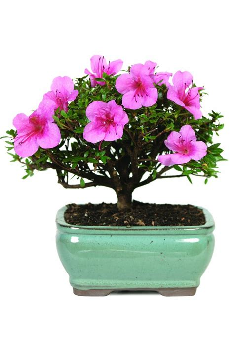 can you buy plants on amazon 10 plants you can buy on amazon shop for houseplants and