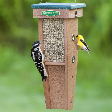 top 28 best woodpecker feeder pileated woodpecker
