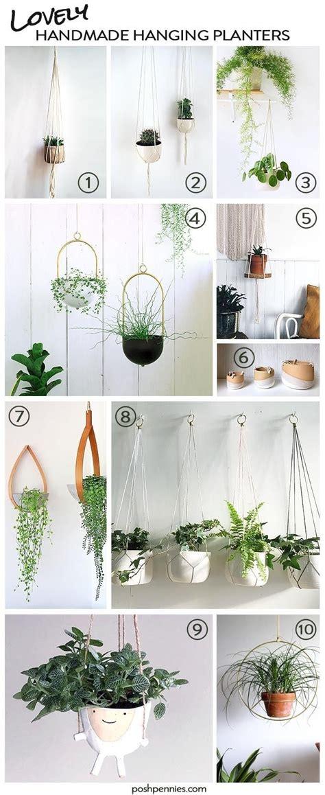indoor hanging plants   beginner wont