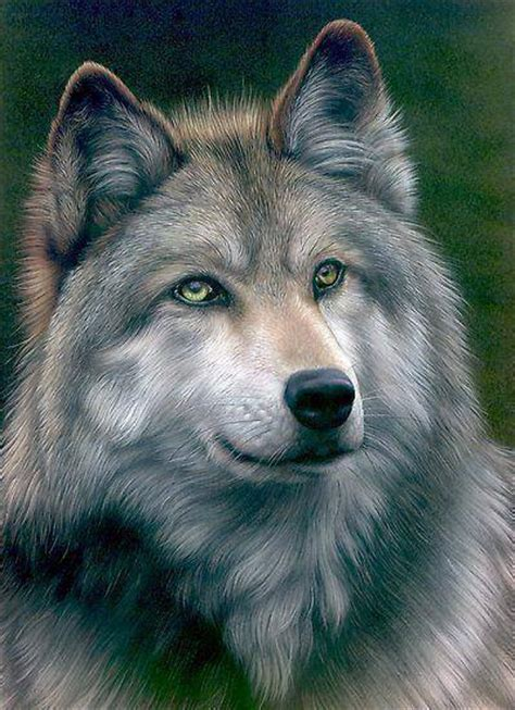 wolves picture book the wolf clan wolf picture book
