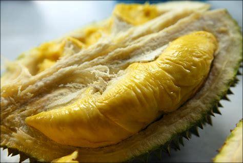 Bibit Durian Bawor Pekanbaru mengenal jenis buah durian pusat bibit durian montong