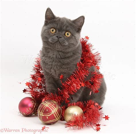 Picture Of Christmas Decorations grey kitten with christmas decorations photo wp19946