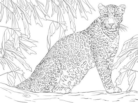 leopard sitting  tree coloring page wildlife big cats