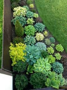 Plant Ideas For Backyard 25 Best Ideas About Low Maintenance Plants On Easy Plants To Grow House Plants And