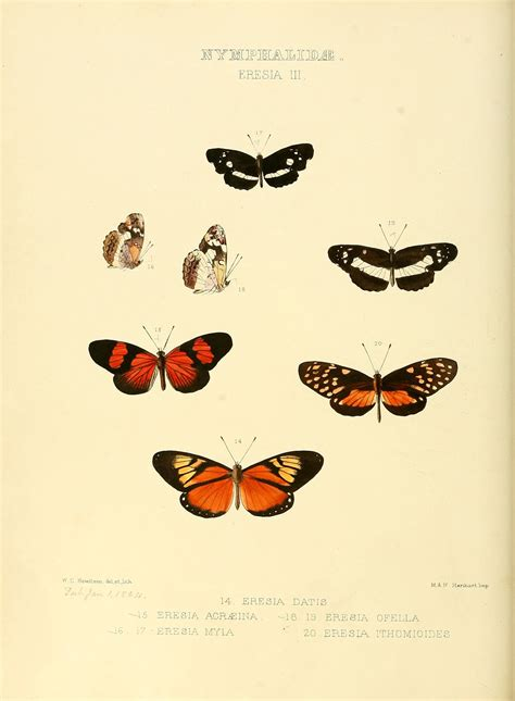 a guide to butterflies of mexico and central america books castilia butterfly
