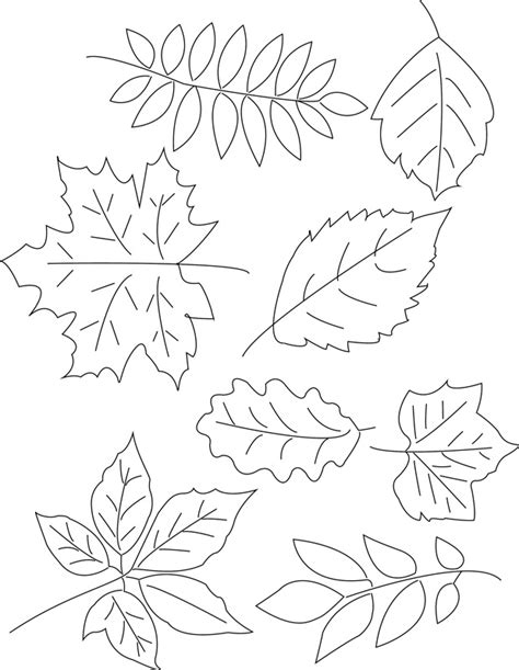 leaf pattern to trace leaf patterns to trace az coloring pages