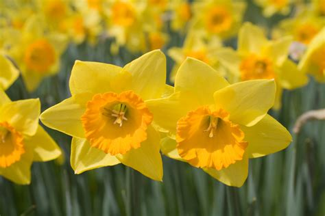 fun flower facts petal talk