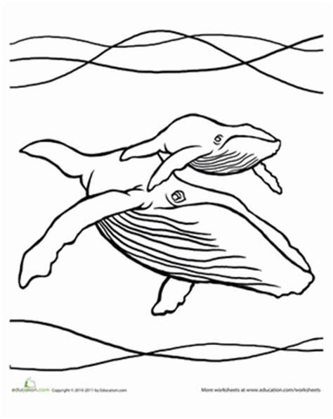 humpback whale coloring pages gallery