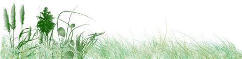 imagenes png vegetacion ecosistemas on emaze