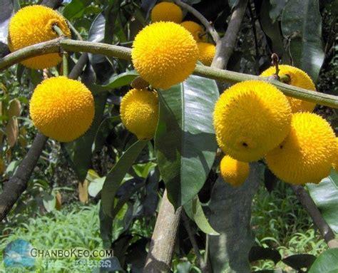 Citrus Tree Nursery sreeju s edible backyard
