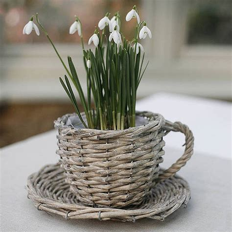 Teacup Planter by Willow Teacup Planter By Ella Notonthehighstreet