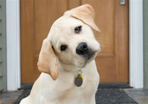 do dogs remember their puppies dogs pay attention to their owners and remember what they do study shows american