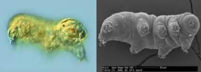 imagenes reales y virtuales en un microscopio optico el alucinante mundo de los tard 237 grados