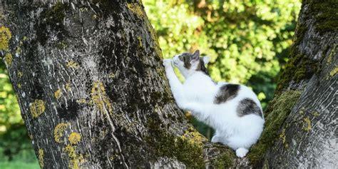 gatto in appartamento gatto in appartamento l importanza di muoversi in altezza