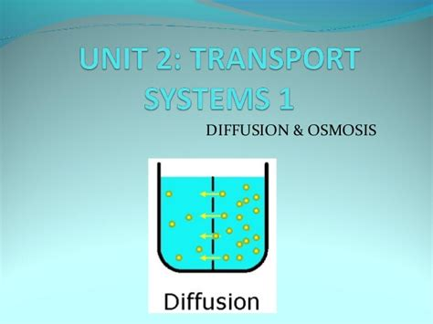 diffusion and osmosis venn diagram pin osmosis and diffusion venn diagram on