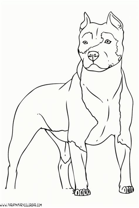 imagenes para dibujar de perros pitbull dibujos de perros 98