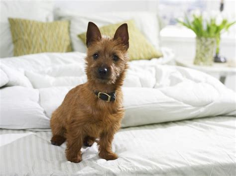 how to stop dog peeing and pooping in house how to stop a dog from peeing pooping on the bed dog care the daily puppy
