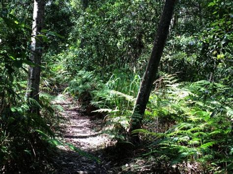 Batemans Bay Botanical Gardens Forest Walks Bring Peace Of Mind Picture Of Eurobodalla Regional Botanic Gardens Batemans Bay