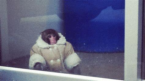 ikea gif space monkey ikea monkey gif wifflegif