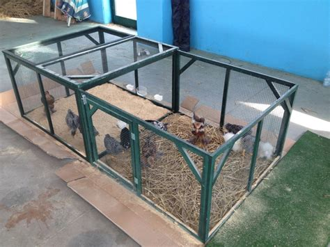 gabbie ornamentali progetto ecologico orticoltura e allevamento live sett 69
