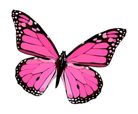 rosa do vetor da borboleta png azul do vetor da borboleta