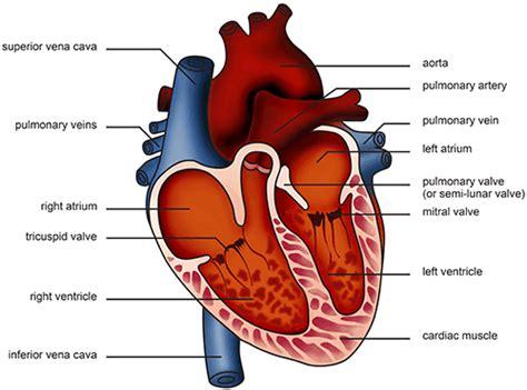 twenty a day die with heart diseases in sri lanka lanka