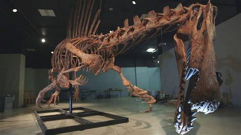 Bigger Than T Rex Spinosaurus The Kid Should See This