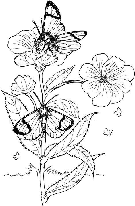 512 Best Images About Coloring Pages On Pinterest Coloring Pages Of Roses And Butterflies