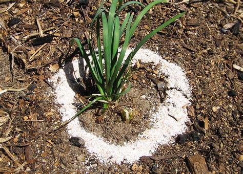 Eggshells In Garden by You Should Start Using Eggshells In Your Garden Corner