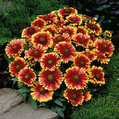 no sun plants best 25 perennial flowering plants ideas on perennial bushes hardy plants and