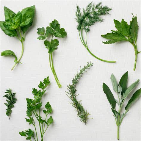 herb garden basics herb garden basics magic mountain basil indispensable