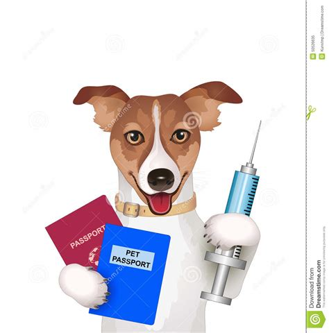 free puppy vaccinations with passport vaccination certificate and syringe stock vector image 50526635