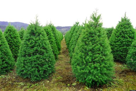green christmas how to make your christmas tree more eco