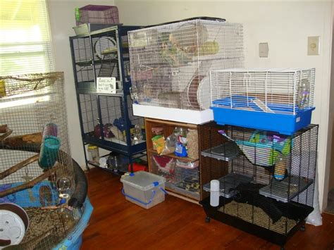 best bedding for rats best bedding for rats 28 images fleece bedding the rat lady the rat report