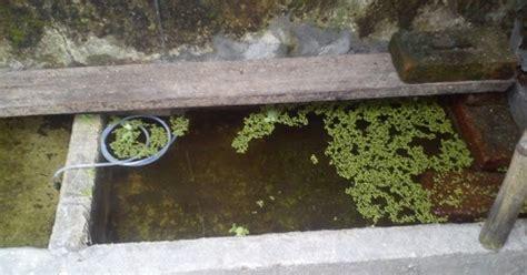 Jenis Kutu Air Untuk Pakan Ikan kutu air sebagai pakan benih ikan enter your name here