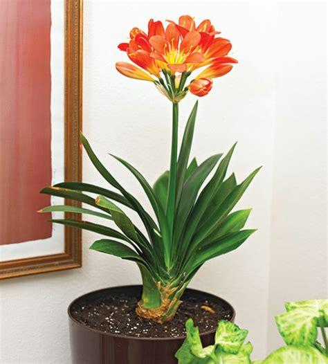 kleine zimmerpflanzen 13 pflegeleichte bl 252 hende zimmerpflanzen