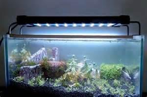 aquarium led beleuchtung test led beleuchtung aquarium erfahrungen l badezimmeraquarium