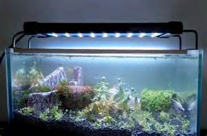 welche beleuchtung aquarium led beleuchtung aquarium erfahrungen l badezimmeraquarium