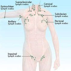 tattoo infection swollen lymph nodes longitudinal sonogram showing multiple reactive lymph